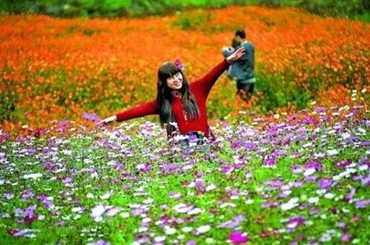 微信头像风景花卉玫瑰